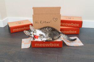 Meow Box